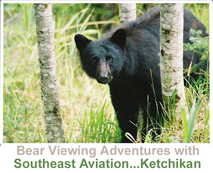 Bear viewing Southeast Alaska